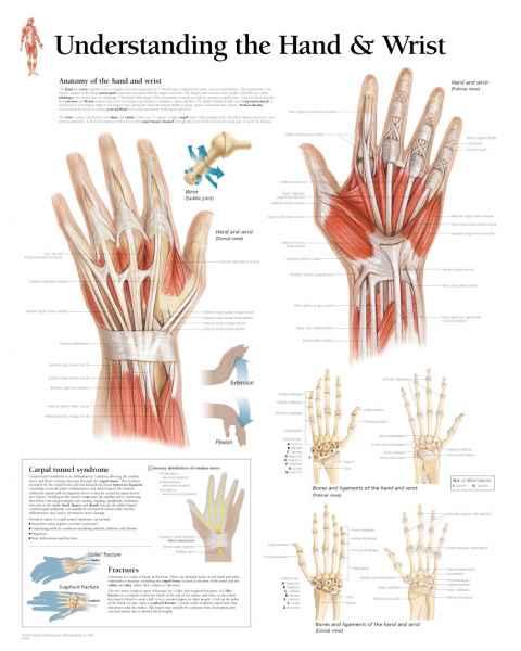 Understanding the Hand & Wrist Chart
