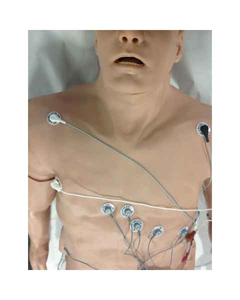 Simulaids 12-Lead Arrhythmia Simulator with Manikin Overlay - Zoll - Large