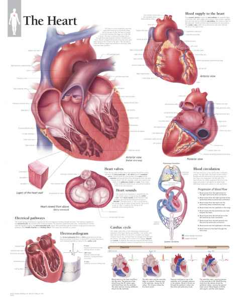 The Heart Chart