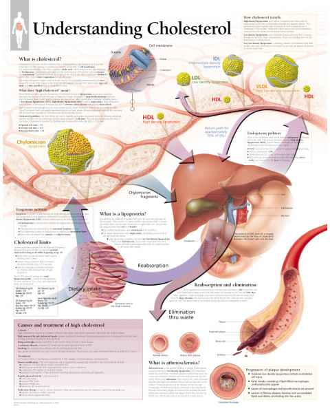 Understanding Cholesterol Chart