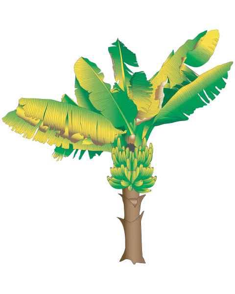 Clinton Wall Sticker - Banana Tree