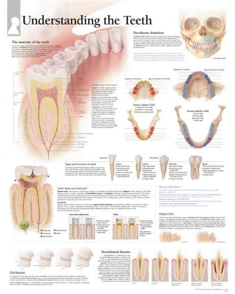 Understanding the Teeth Chart