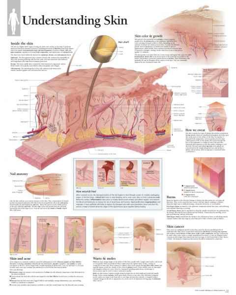 Understanding Skin Chart