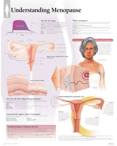 Understanding Menopause Chart