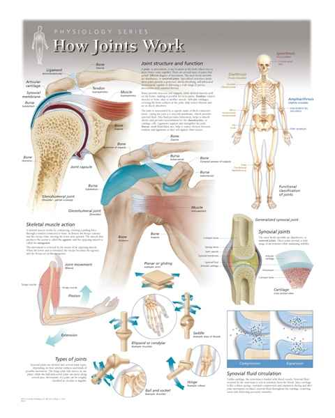 How Joints Work Laminated