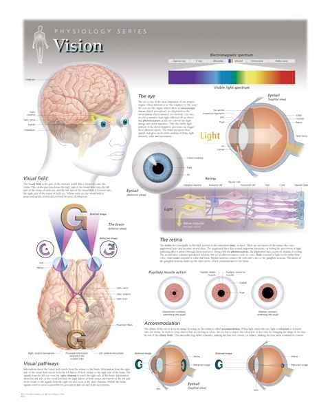 Vision Laminated