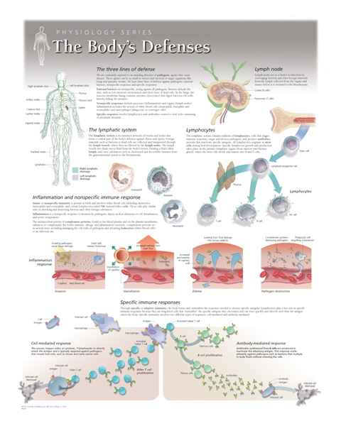 The Body's Defenses Laminated