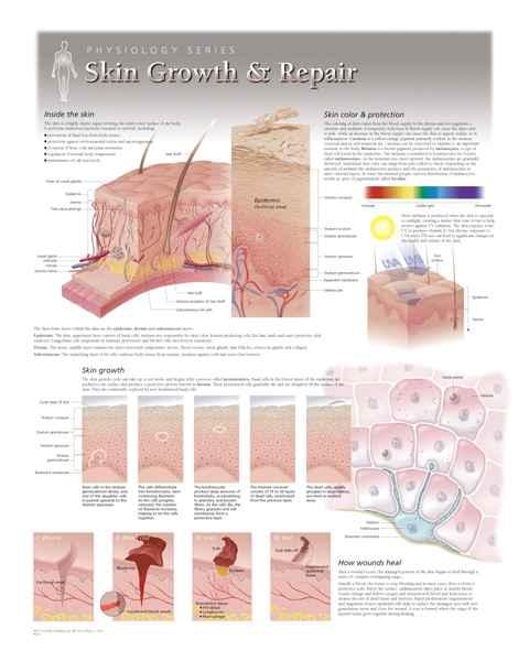 Skin Growth & Repair Laminated