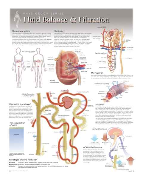 Fluid Balance & Filtration Laminated