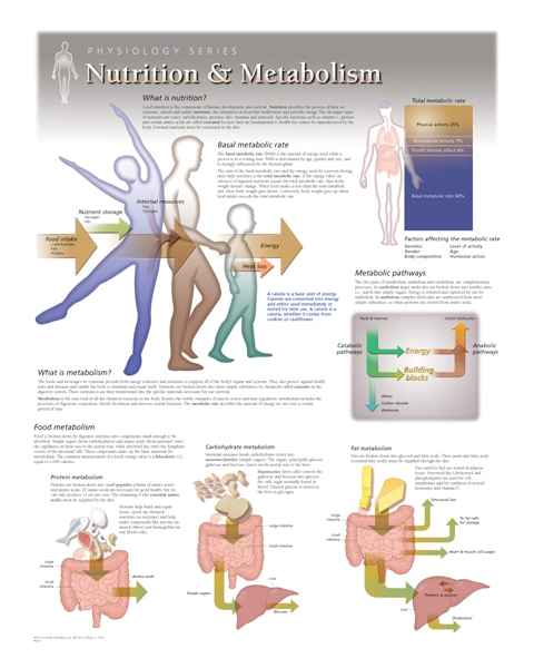 Nutrition & Metabolism Laminated