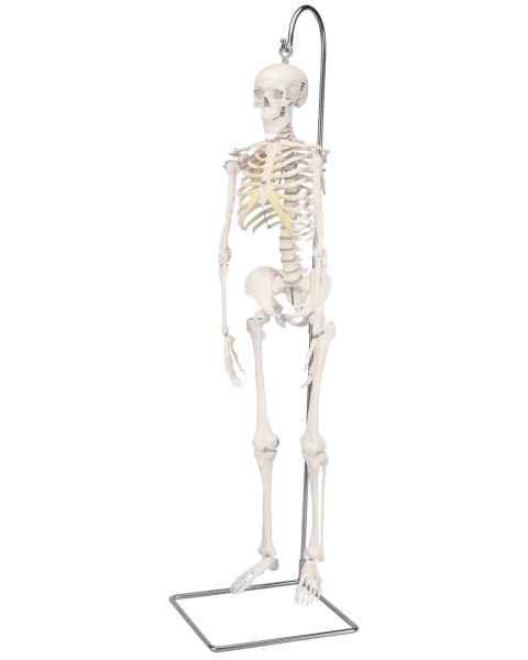 Mini Skeleton on Hanging Stand