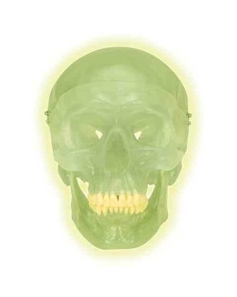 3B Scientific A20-N Neon Human Skull
