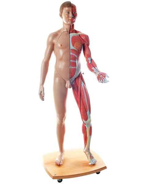 Life-Size Dual Sex European Muscular Figure 39-Part