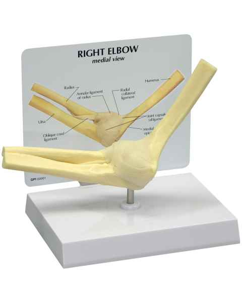Basic Right Elbow Join Model (Rigid)