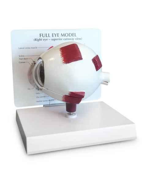 Full Eye Model