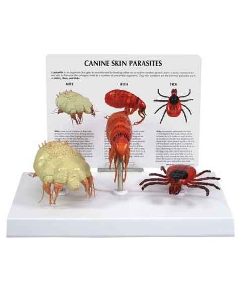 Skin Parasites Model