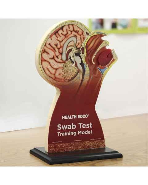 Swab Test Training Model HC53412