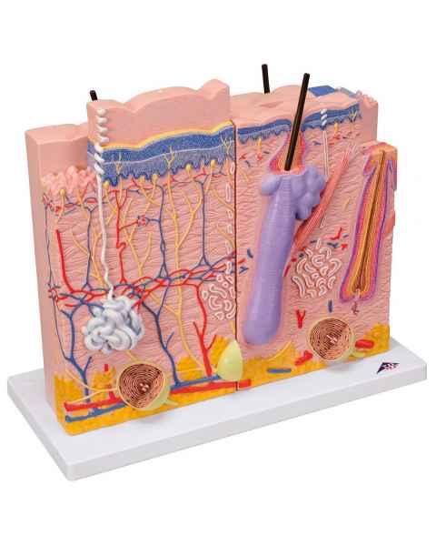 3 Part Skin Model