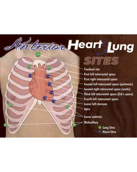 Life/form Anterior Heart & Lung Sites Poster