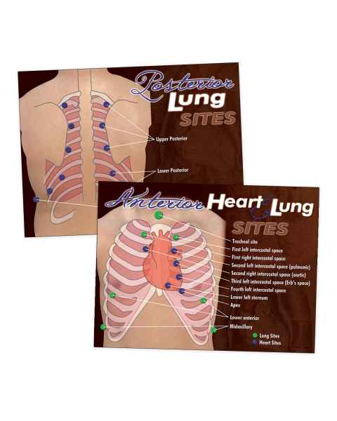 Life/form Heart & Lung Sites Visual Aids Poster Set
