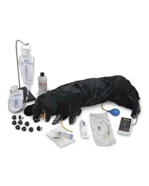 Life/form Advanced Sanitary CPR Dog