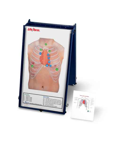 Life/form Anterior Auscultation Practice Board with Case Only