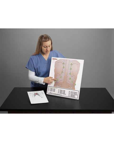 Life/form Posterior Auscultation Practice Board Only