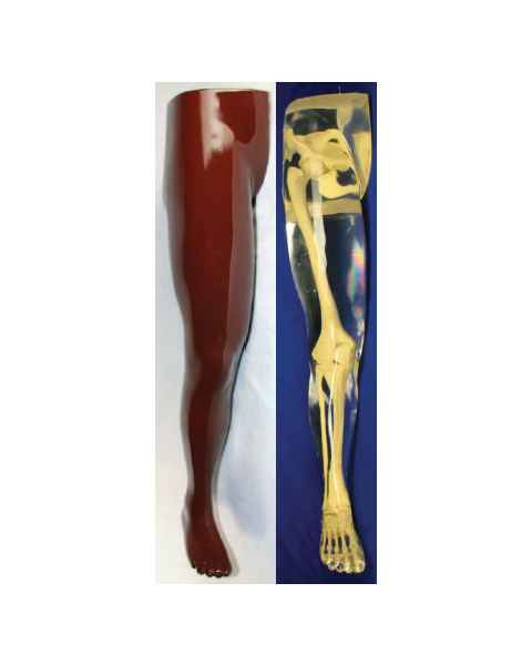 RSD Anthropomorphic Complete Leg Hip Phantom