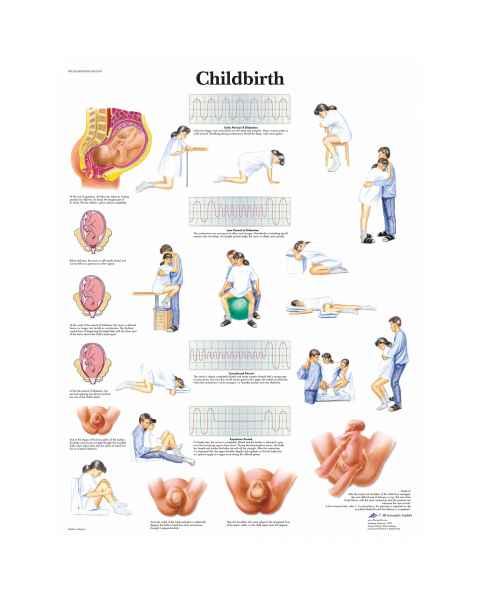 Childbirth Chart