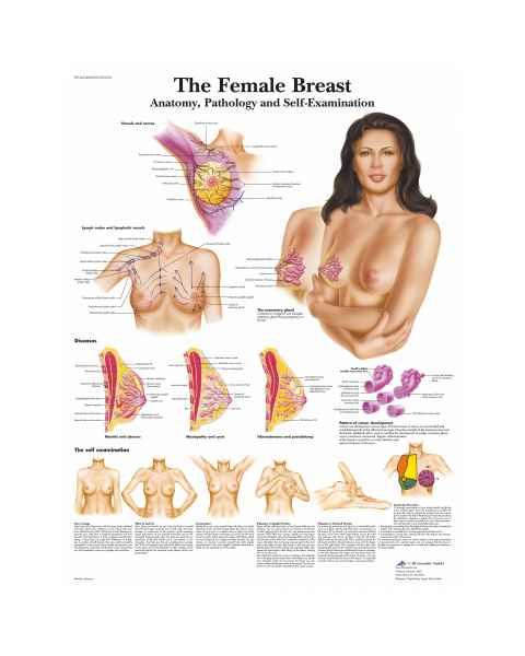 The Female Breast Chart