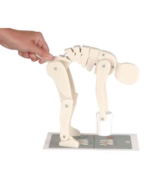 Lifting Demonstration Figure
