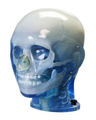Pediatric Anthropomorphic Head Phantom