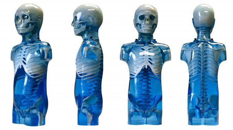 Pediatric Anthropomorphic Trunk Phantom