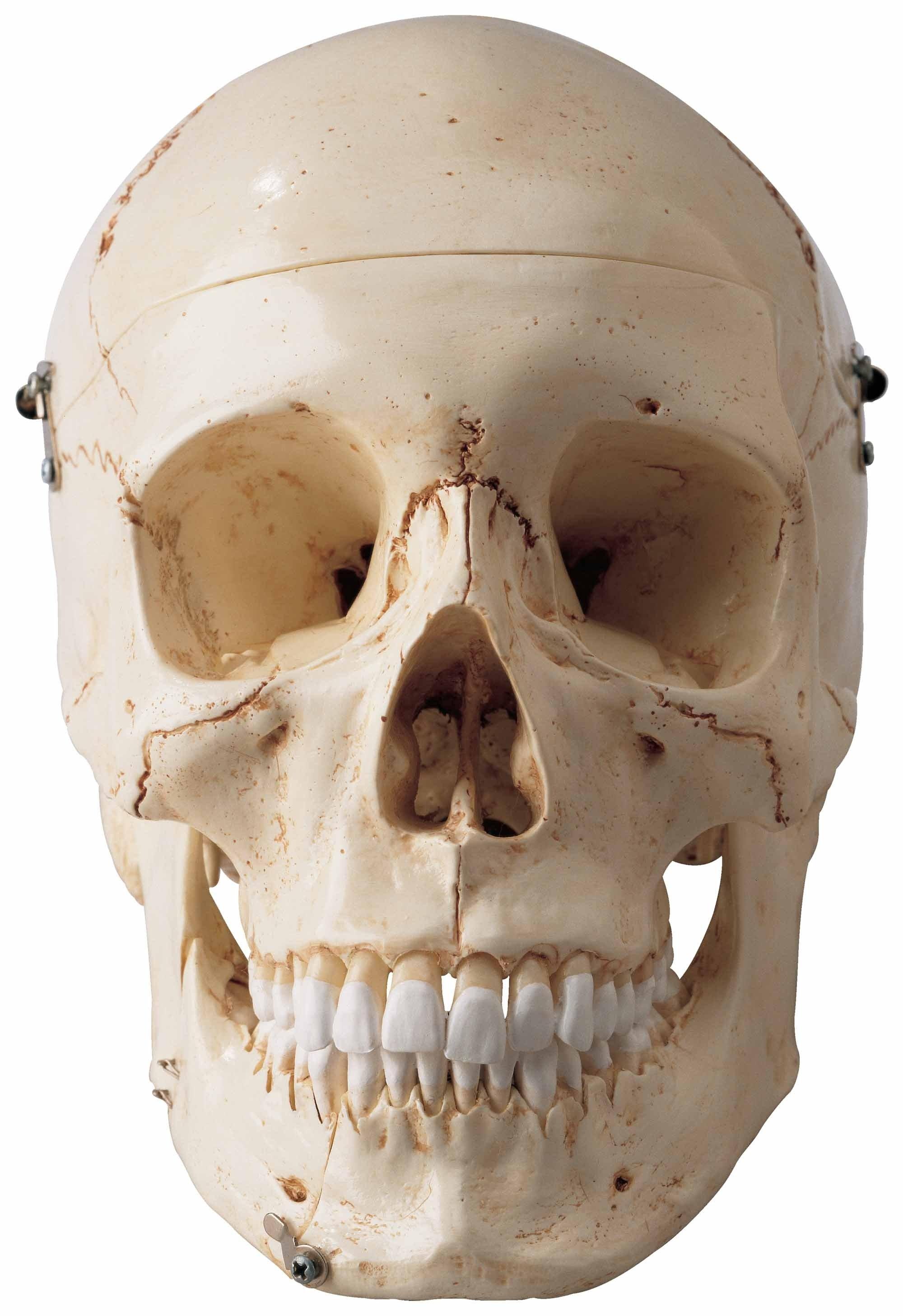 Special Edition Premier Skull
