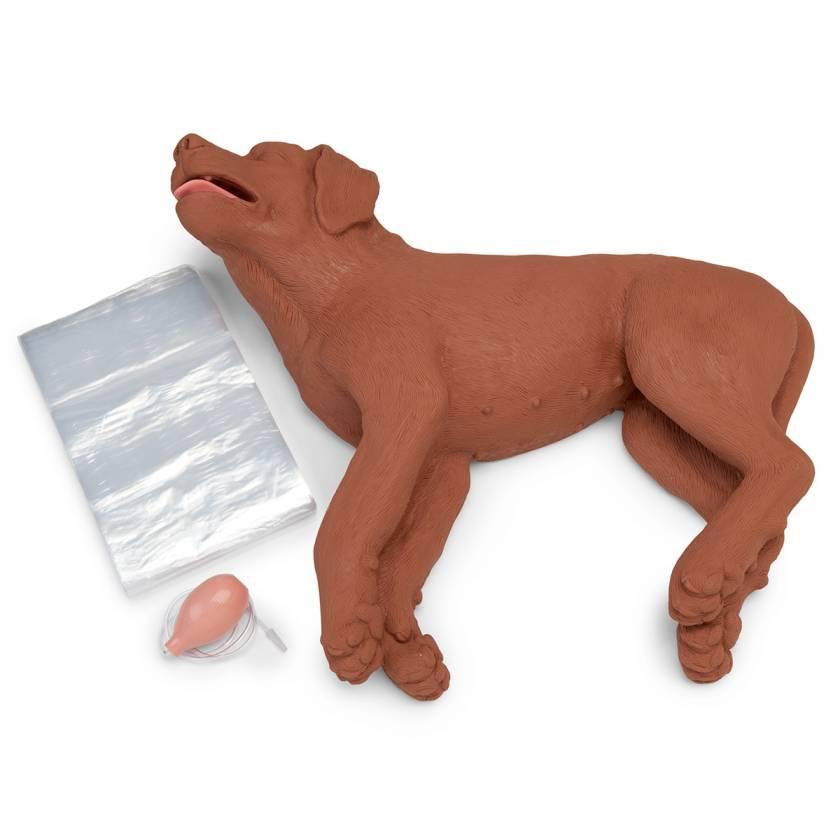 Simulaids CasPeR the CPR Dog