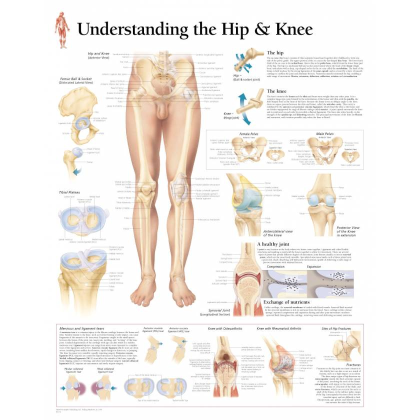Understanding the Hip & Knee Chart