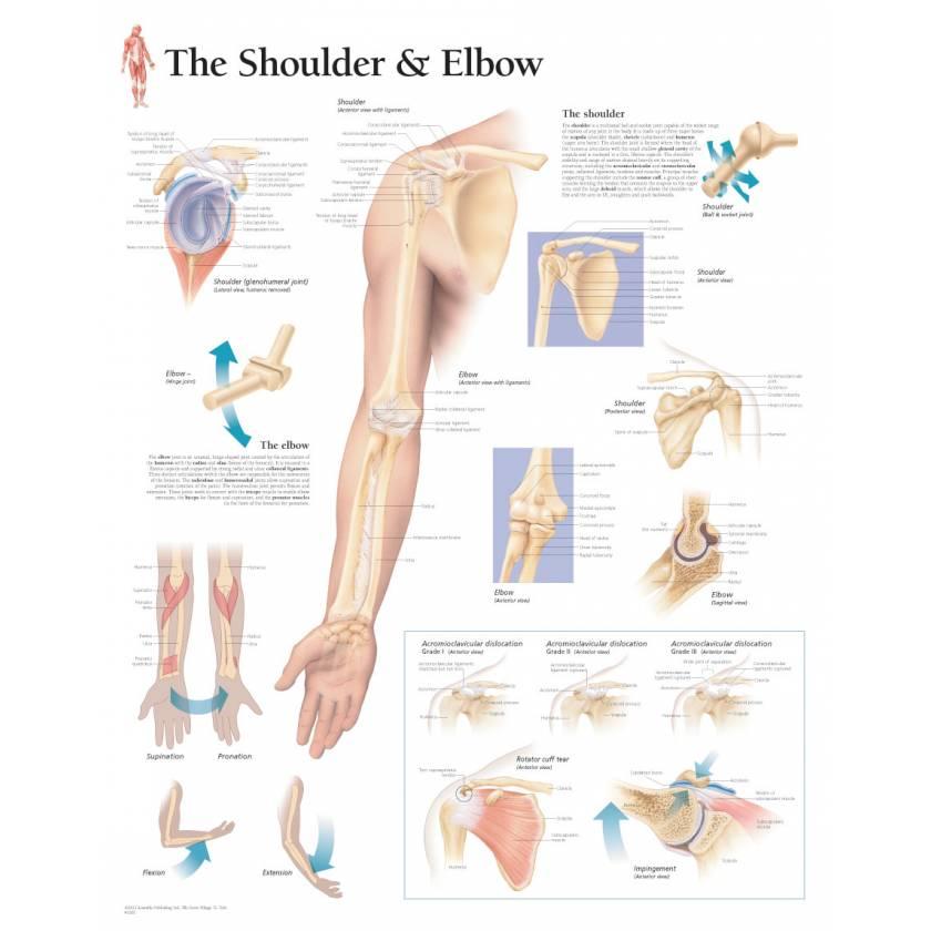 Understanding the Shoulder & Elbow Chart