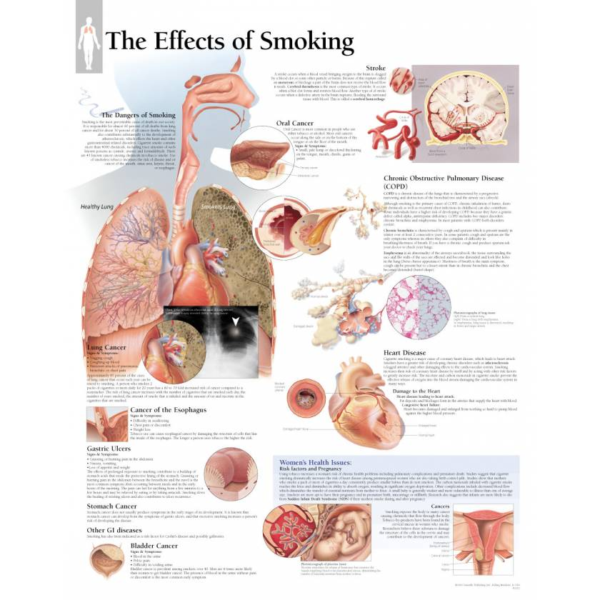 The Effects of Smoking Chart