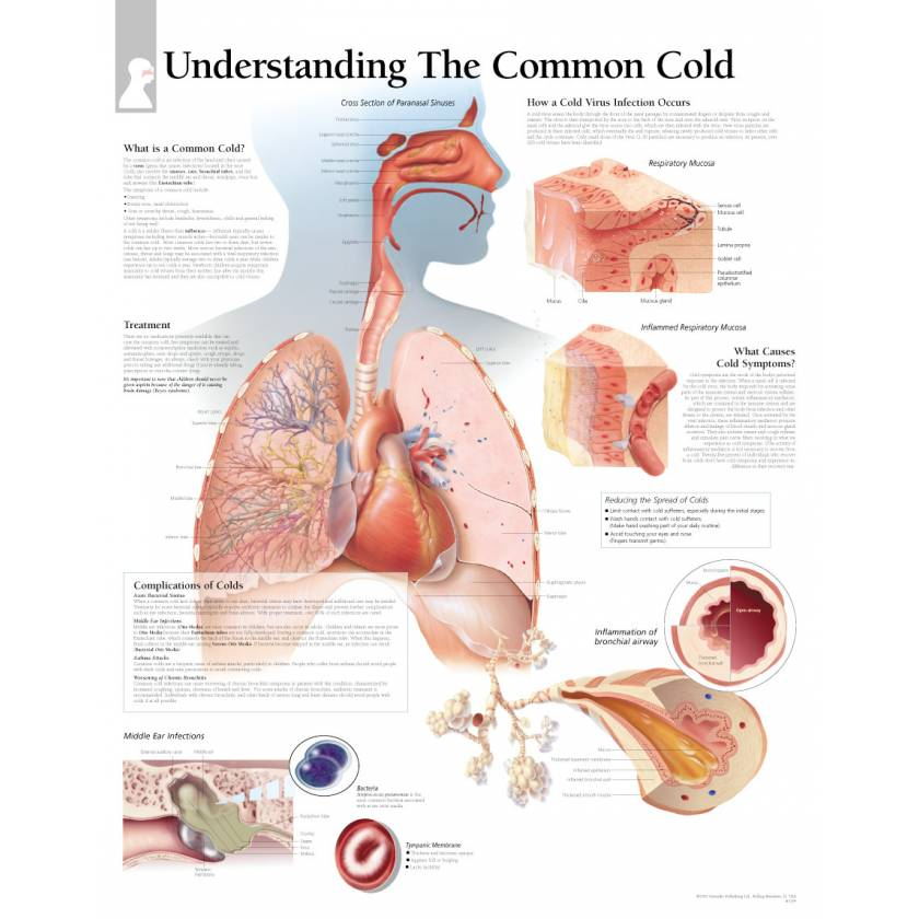 Understand The Common Cold Chart