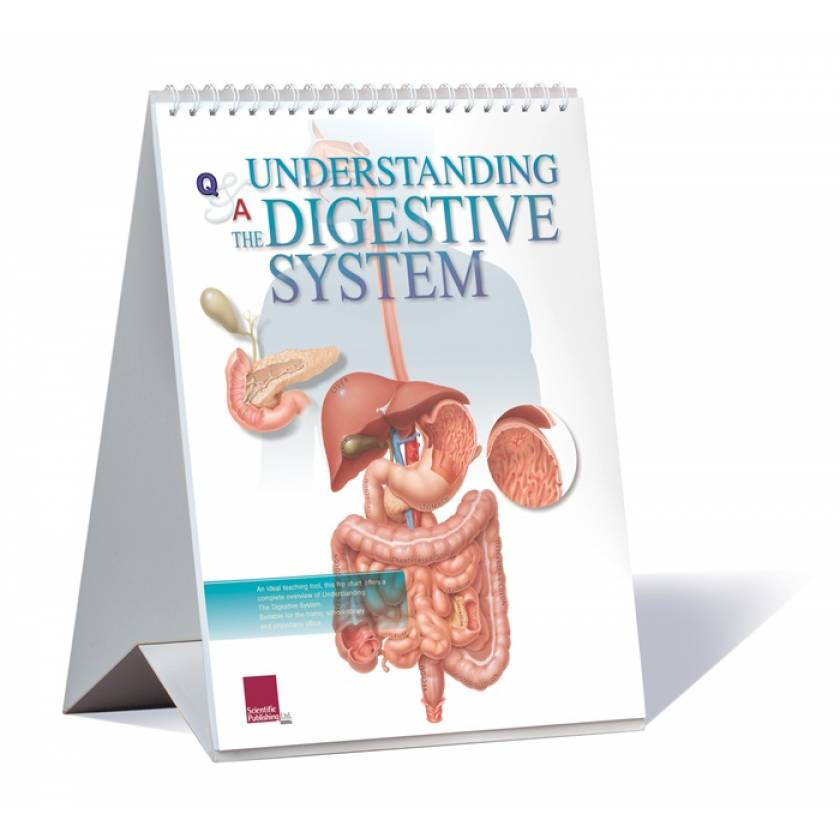 Understanding The Digestive System Flip Chart
