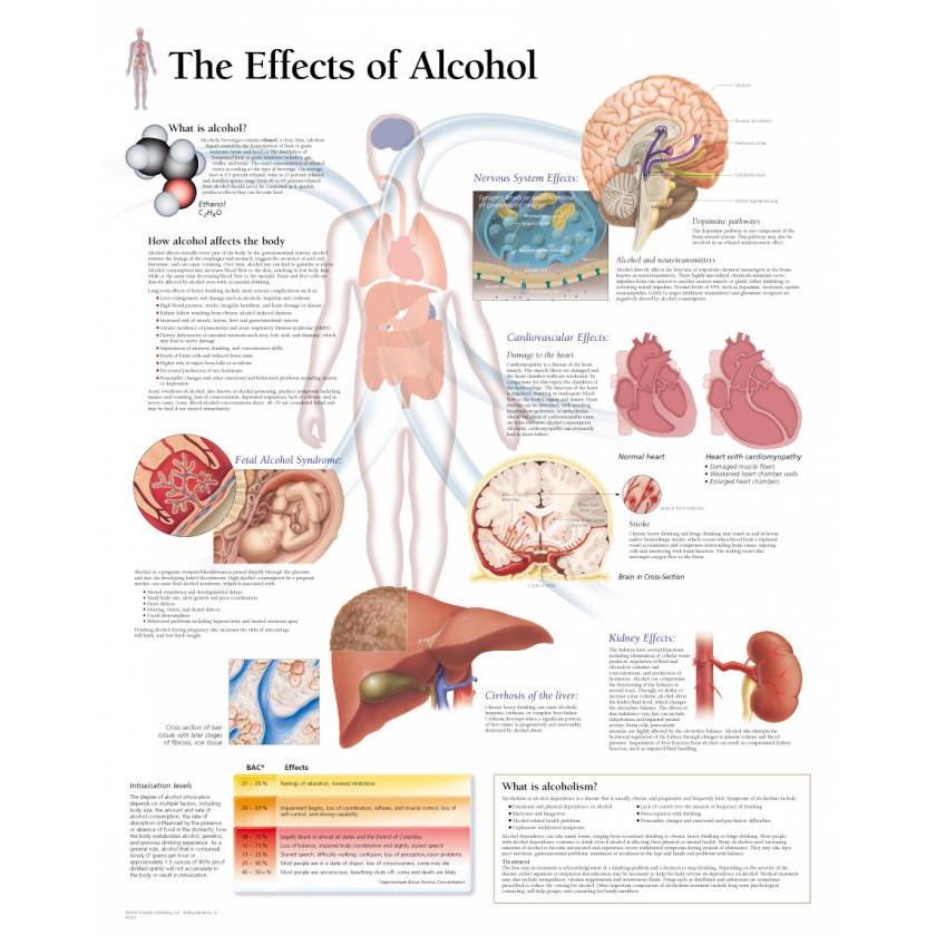 The Effects of Alcohol Chart