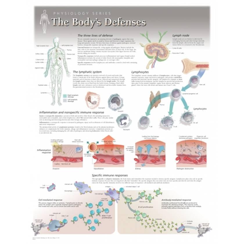 The Body's Defenses Laminated