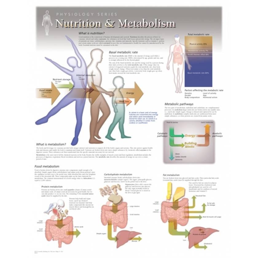 Nutrition & Metabolism Laminated