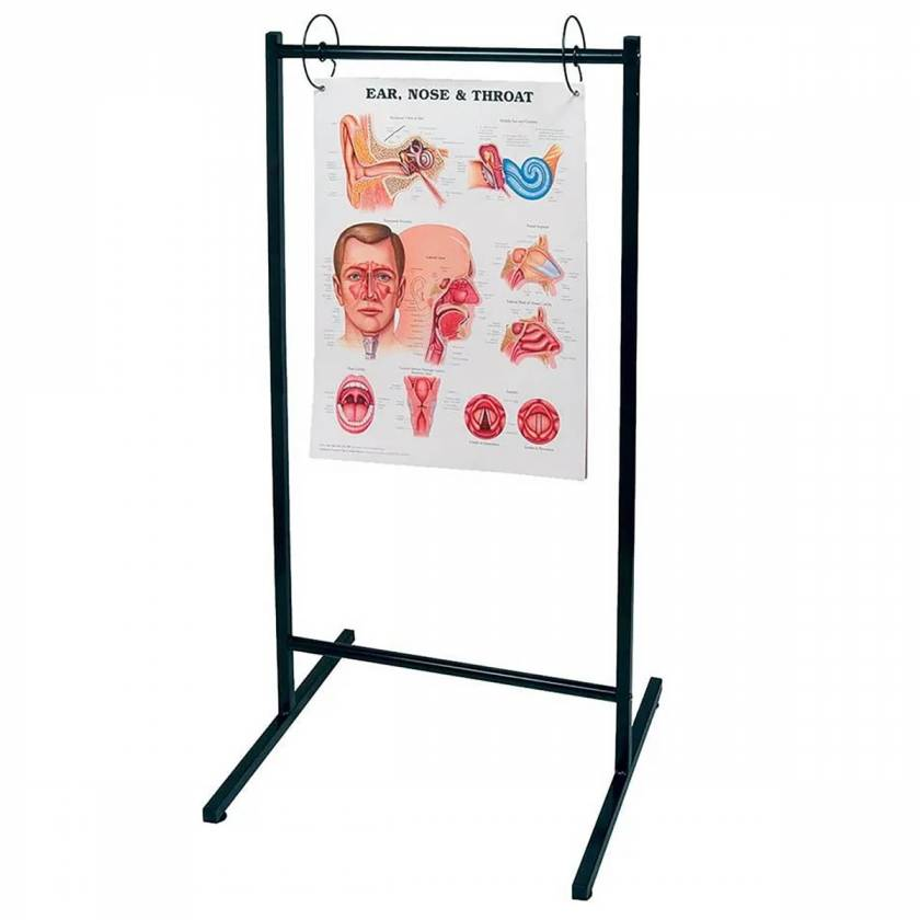 Portable Chart Stand (Not included Ear, Nose & Throat Chart)