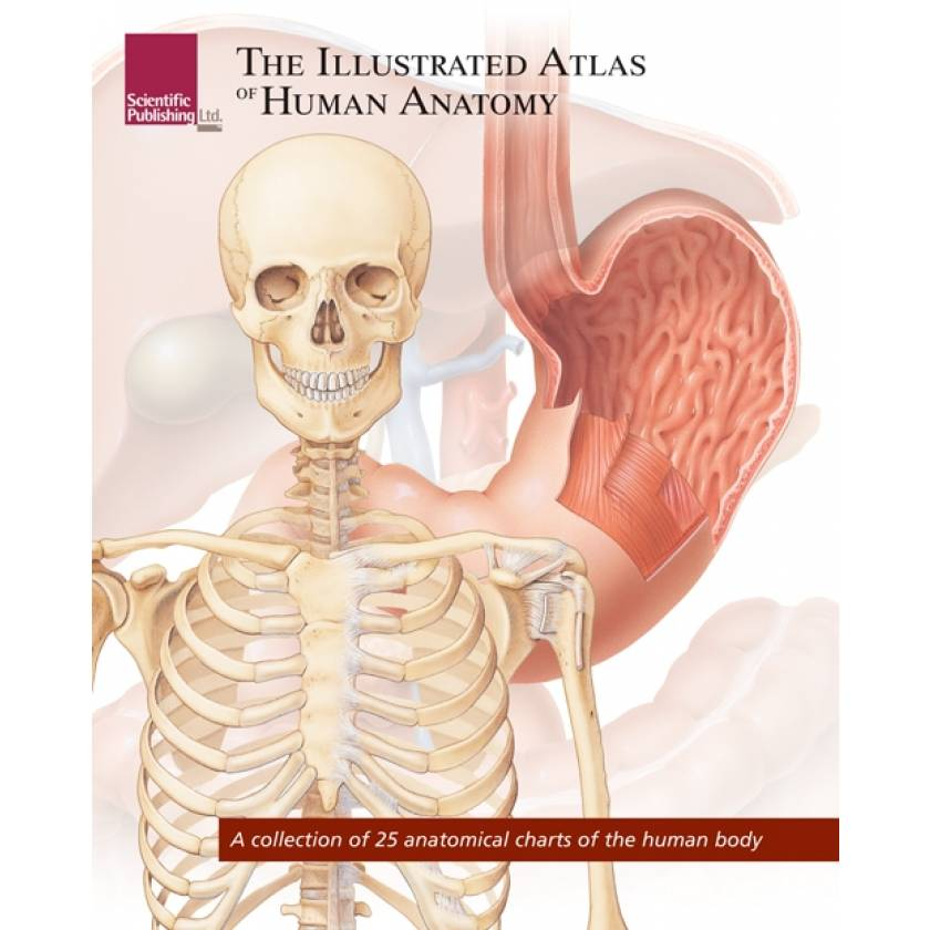 The Illustrated Atlas of Human Anatomy