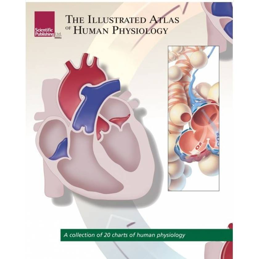 The Illustrated Atlas Of Human Physiology