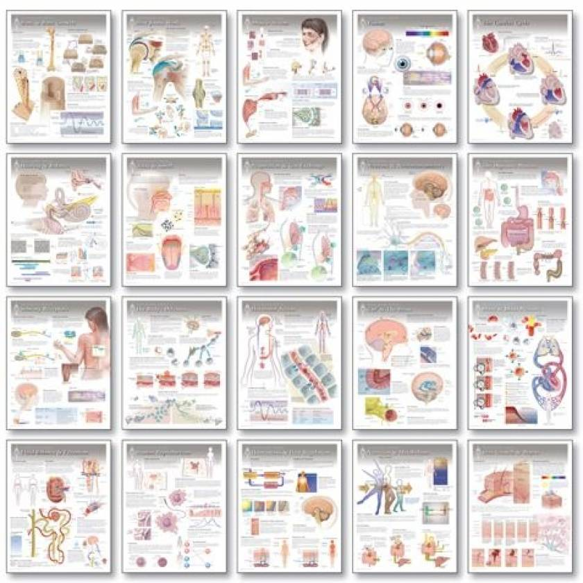 Complete Set of All 20 Physiology Charts