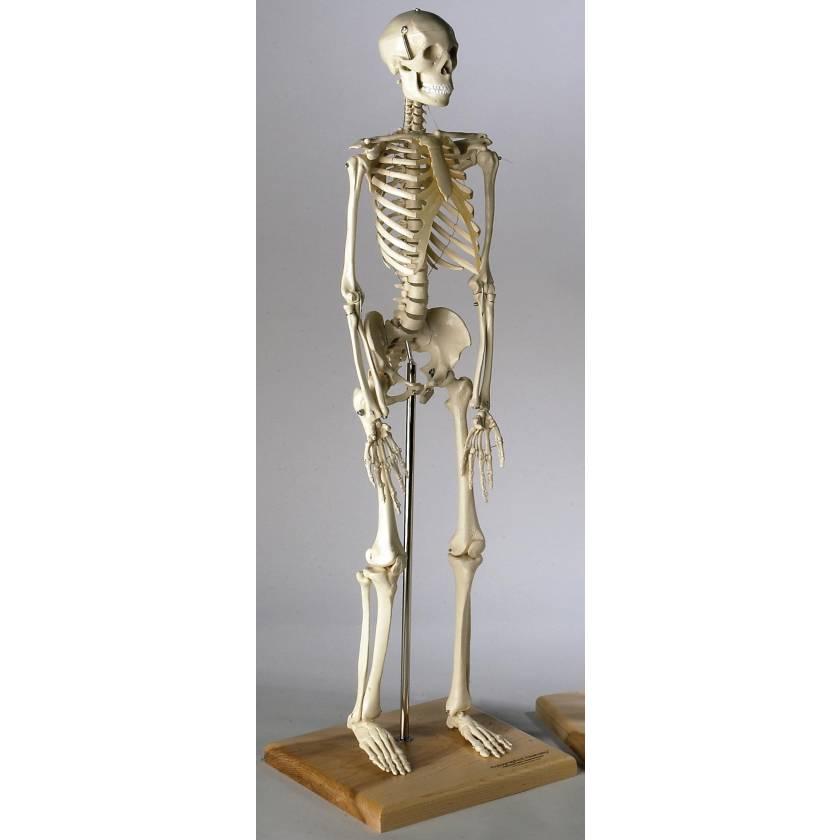 Mini Skeleton 28 Inches
