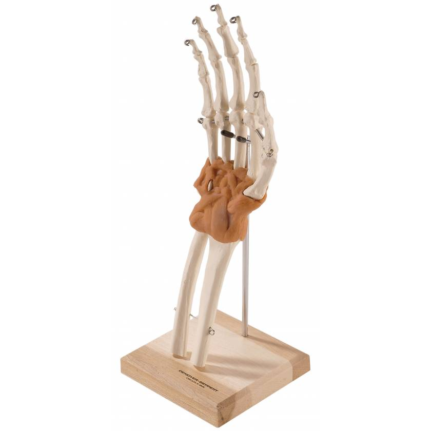 Ultraflex Ligamented Hand & Wrist - Functional Replica