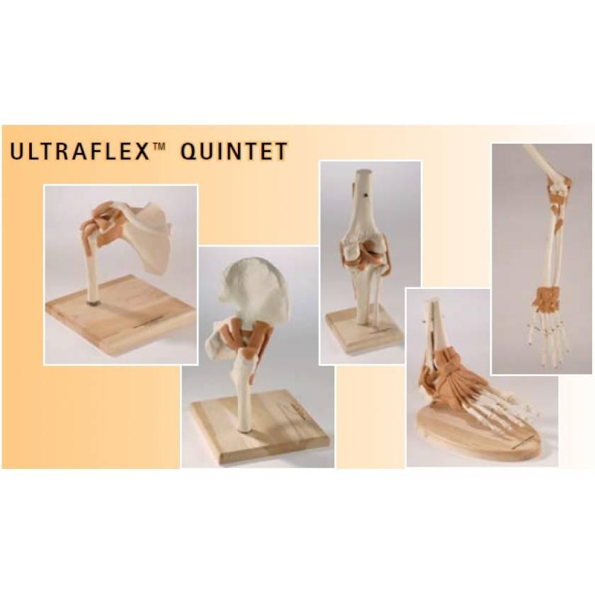 Ultraflex Ligamented Joint Quintet